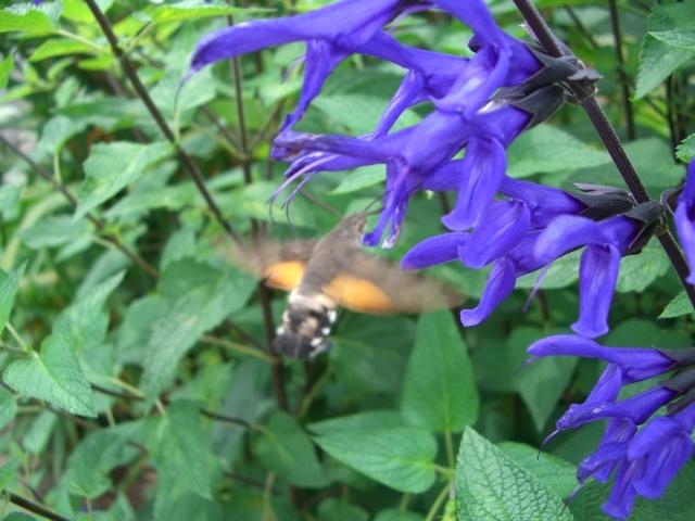 花とハチ(CG2671).JPG